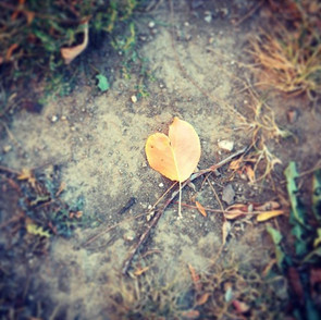 I love you too, fall. #dontgo.jpg