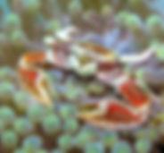 11_07 NOV 1st MLosey2.jpg