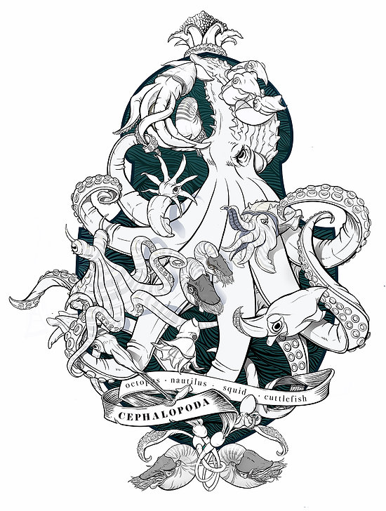 Cephalopod coloring page.jpg