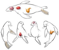 Marine Mammal Center Kiosk Art