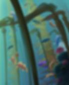 Reef-closeup-for-web.jpg