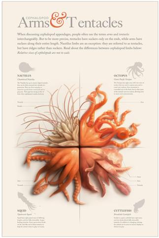 cephalopod-poster_edited.jpg