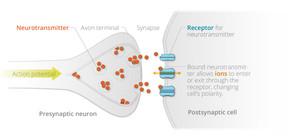 synapse Cengage.jpg