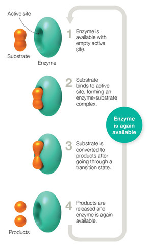enzymes-candy_edited.jpg