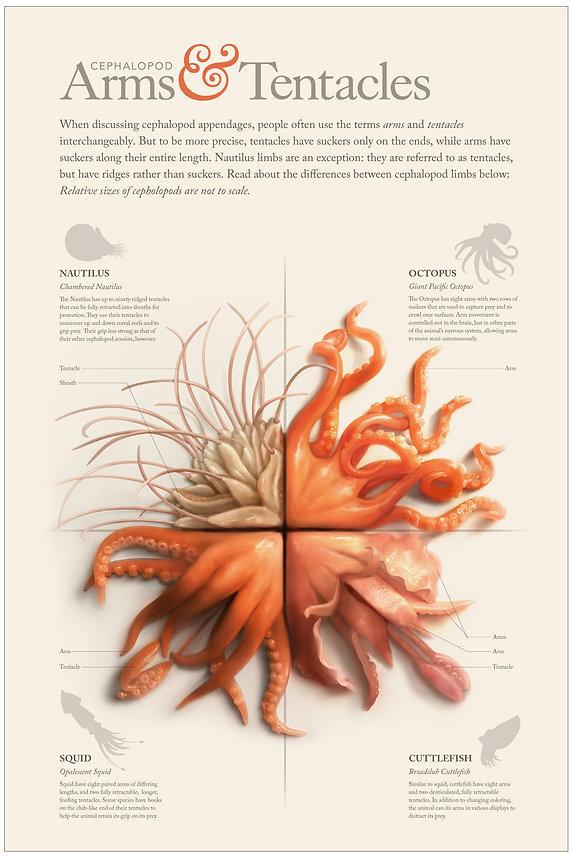 cephalopod-poster FINAL.jpg