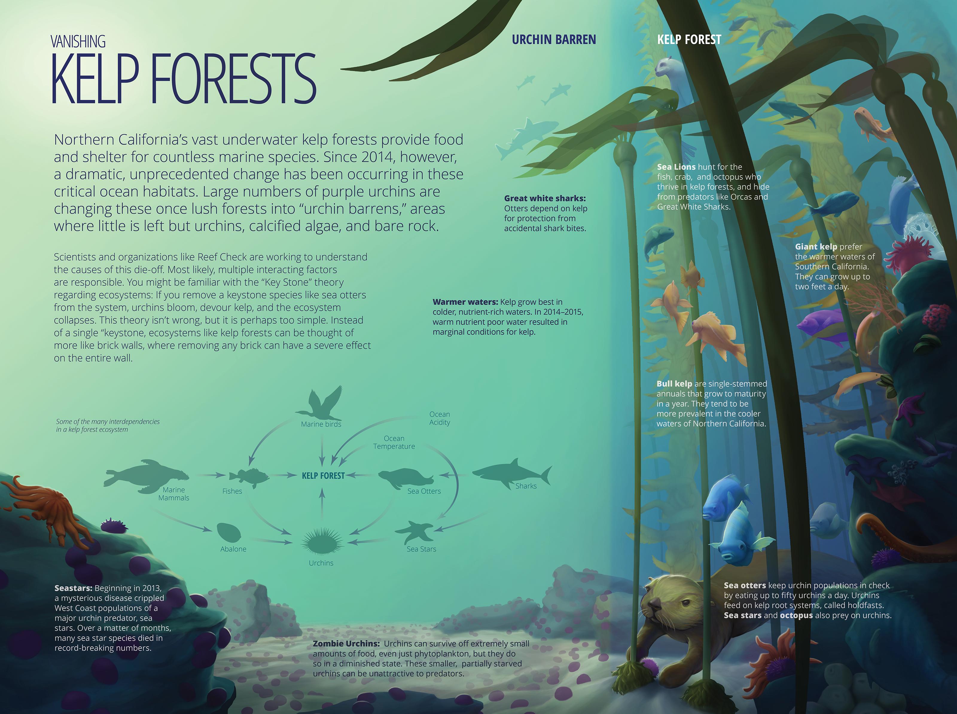 Vanishing Kelp Forest
