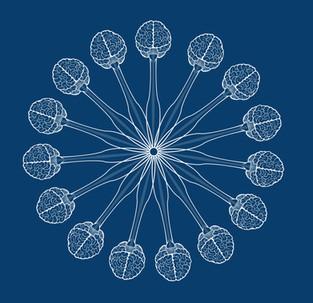 Nervous System Icon
