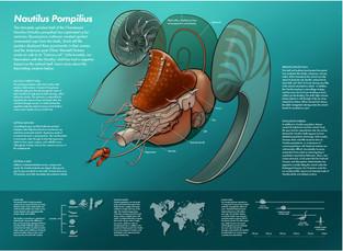 Threatened Nautilus Populations