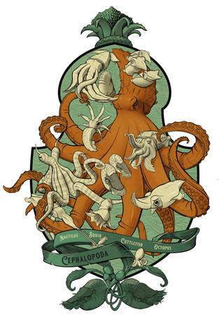 KMurphy-Cephalopoda.jpg