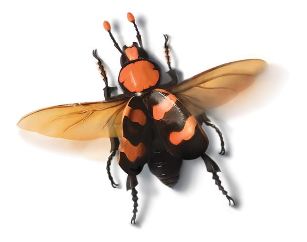 Actual-size-beetle.jpg