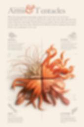cephalopod-poster_edited_edited.jpg