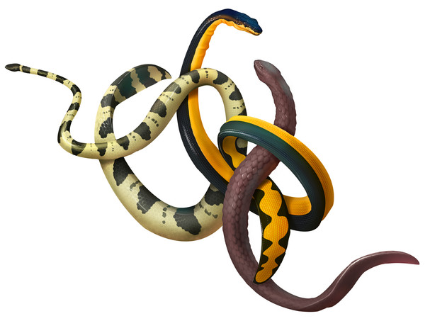 snake-trio.jpg