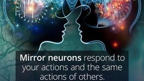 Why mirror neurons mean that...