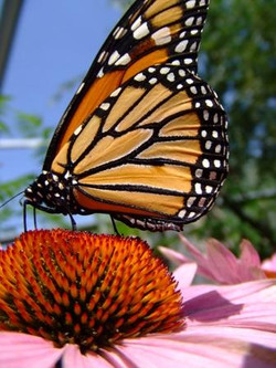 Butterfly Photo Adventure