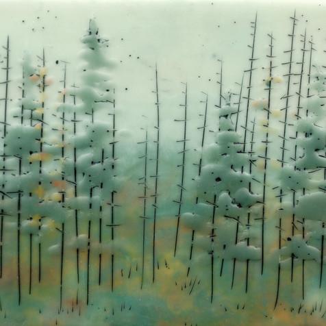 Quiet Forest no. 77