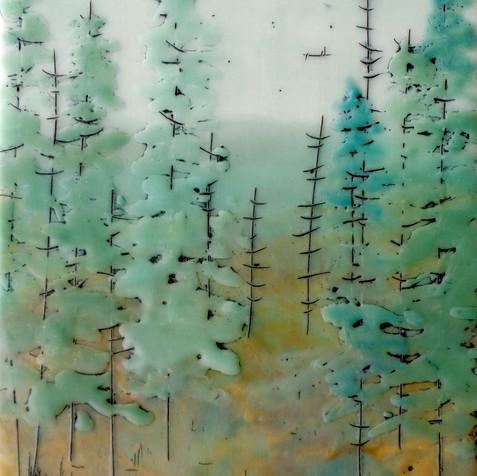 Quiet Forest no. 62