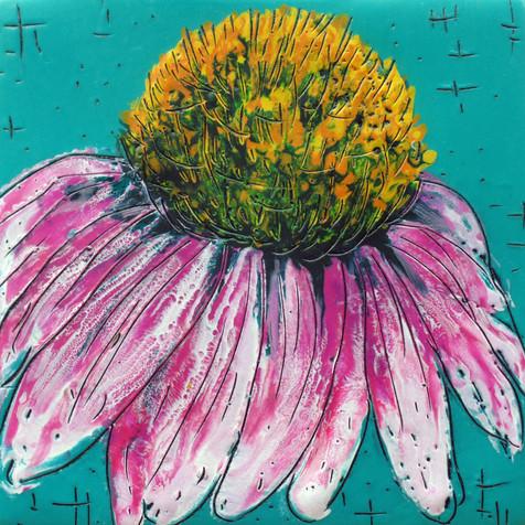 Magnus Pink Echinacea