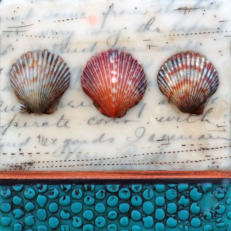 Shells & Words no. 3