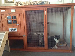 Nelson's room at Miss U Motel for Moggies Cattery Canberra