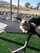 Cattery Canberra