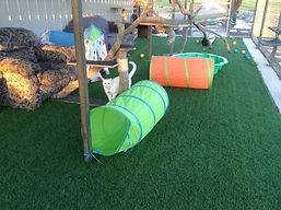 Exterior play area at Miss U Motel for Moggies Cattery Canberra
