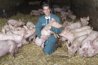 porcs élevés sur paille Sylvain Rispal