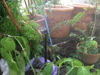 Project Site: Gottlieb Garden - Semi D