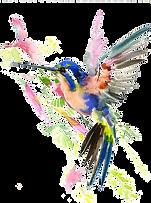 colibri3.png