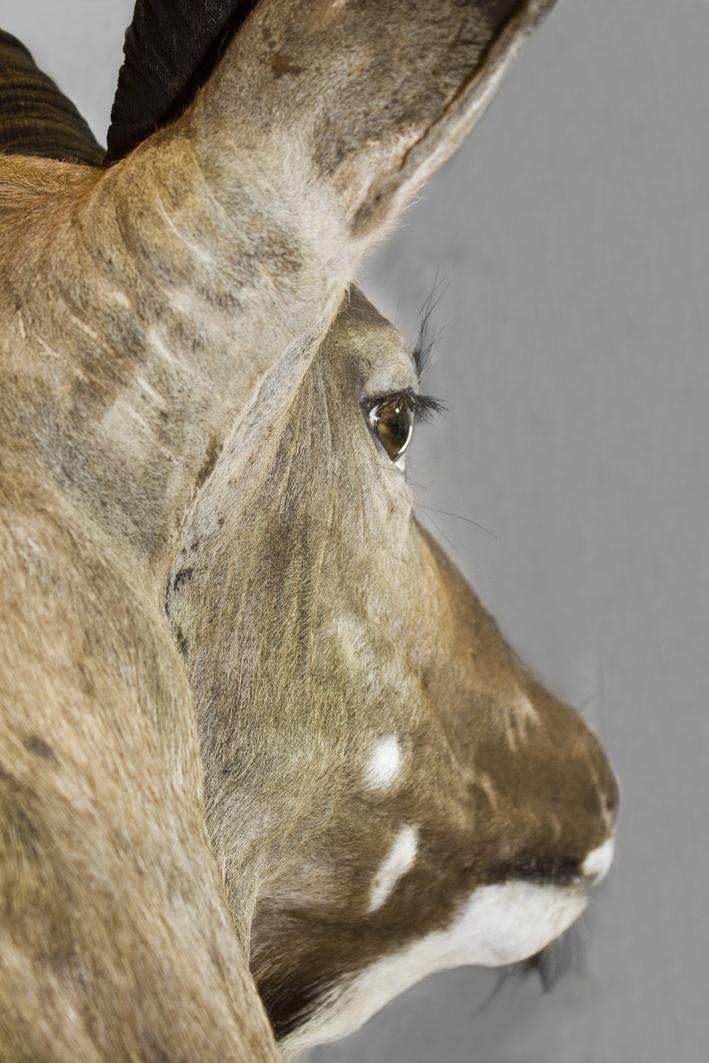 Kudu desde atras_ok.png