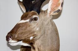 kudu detalle1.png