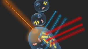 Researchers Use Gold Nanorod Scattering to Identify Immune System's 'Killer and Savior'