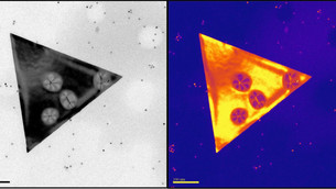 Weak force has strong impact on nanosheets