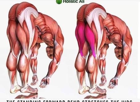 Full forward fold - Uttanasana