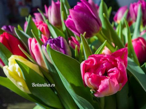 Fresh & Crispy Unusual Tulips