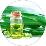 eucal oil 40x40.png