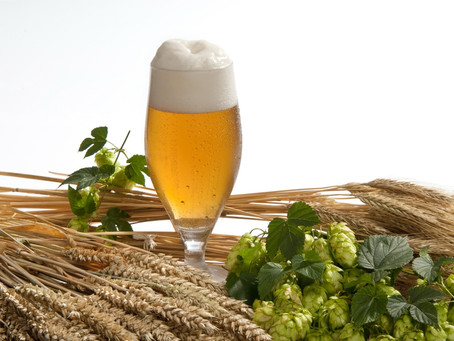 Discover the benefits of our 4 main Beer Ingredients