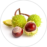 horse chestnut 40x40.png