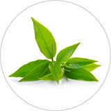 green tea leaf 40x40.png