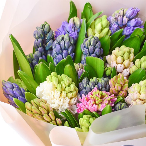 Spring Hyacinth /mix colors/ per psc.