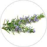rosemary 40x40.png