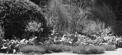 Blumen Pflege - Gärten & Pools Sven Studer AG