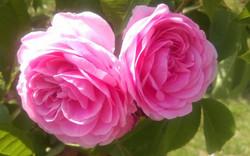 Blumen - Gärten & Pools Sven Studer AG