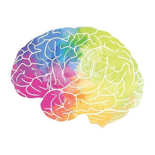 brain 6.jpg