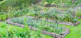permaculture (Copier).png