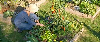 jardinière au potager