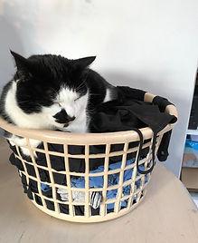Gizmo Cat