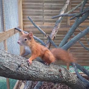 Új lakók az állatkertben!