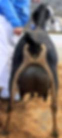 Newt13Rear.jpg