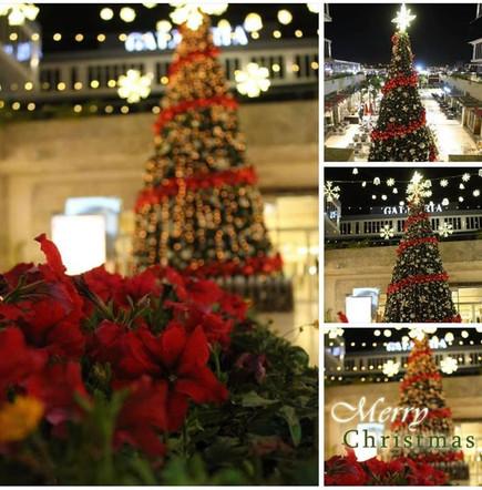 #christmas_tree #galeria40