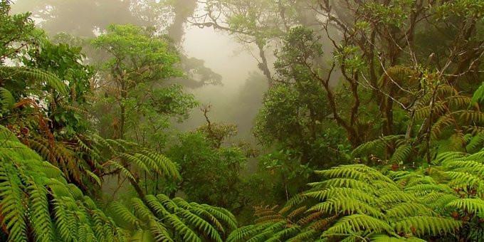 Monteverde rainforest cloudforest, Costa Rica